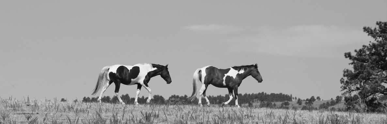 life coaching horses