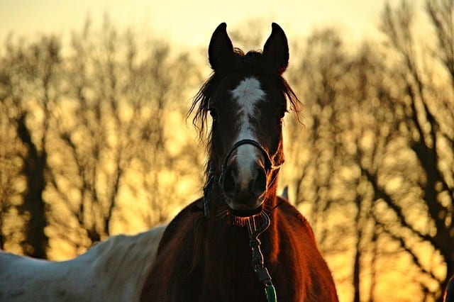 7 Essential Oil Blends Perfect for Pampering Your Horse