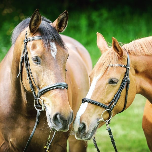 emotional abuse and how horses can help