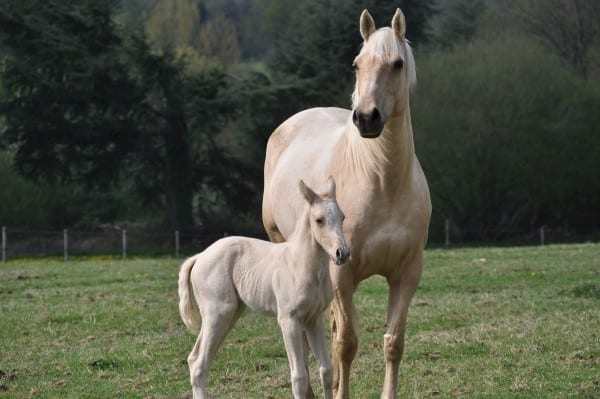 horses children life-coach advice empty nester