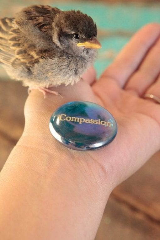 Compassion Sagewise Stone